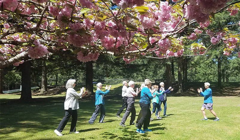 People practice T'ai Chi Chih on the grass beneath a Cherry Blossom tree