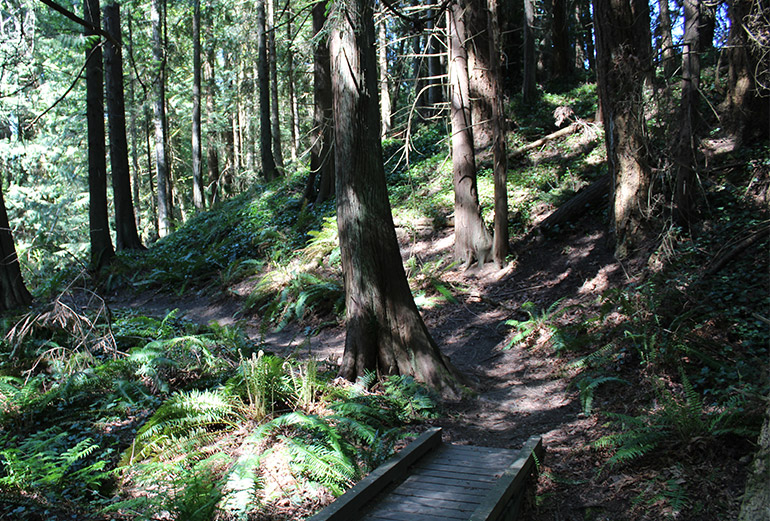 Shadowy forest with a wooden boardwalk, ferns, trees, and a trail